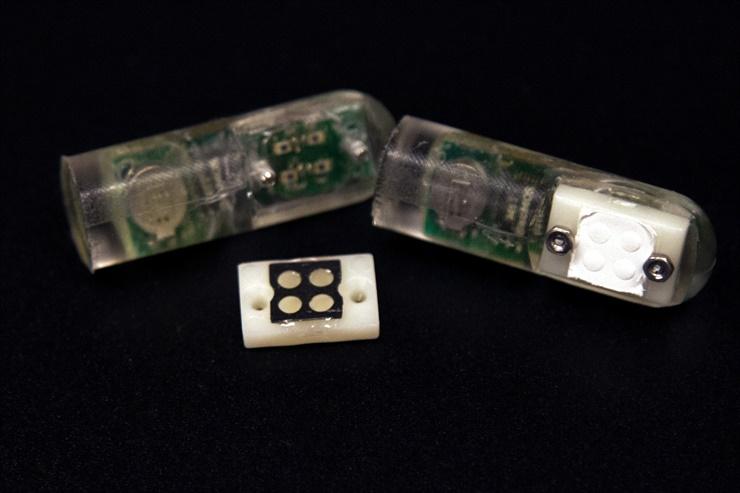 Sensor-bacteria del MIT