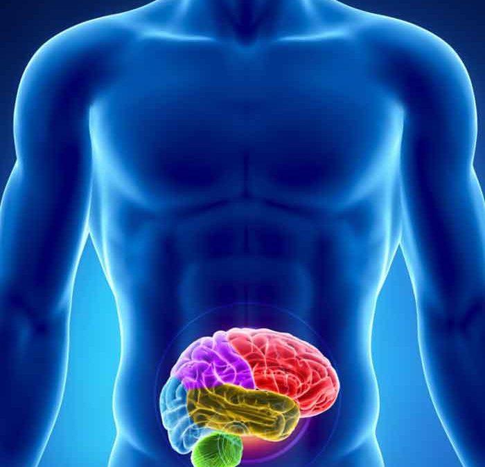 Sistema nervioso entérico, segundo cerebro
