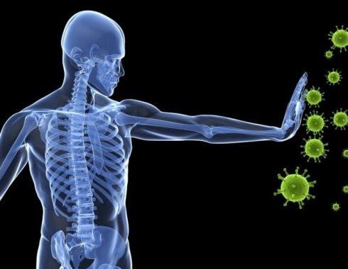 Descubren micro organo que ayuda a entender como funcionan las vacunas