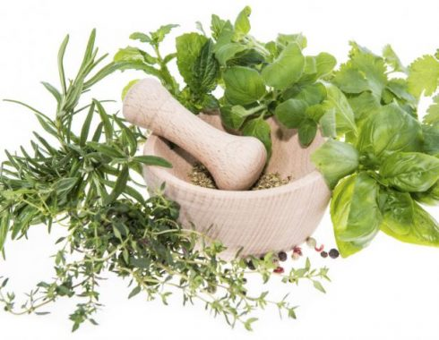 Cofepris aprueba 18 plantas medicinales para venta