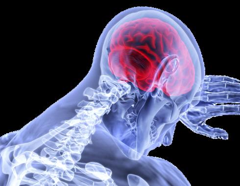 Investigadores hallan pistas de la relación entre depresión y envejecimiento cerebral
