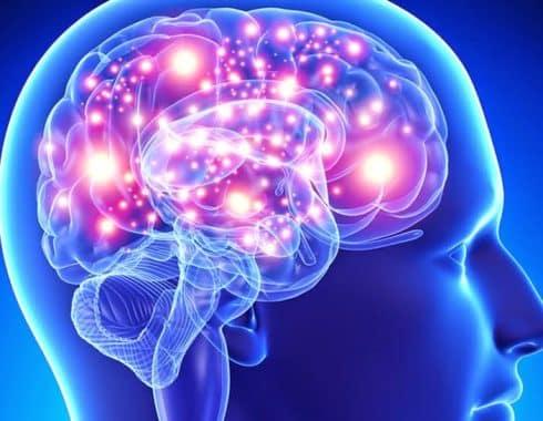 El cerebro produce cannabinoide que alivia el estrés