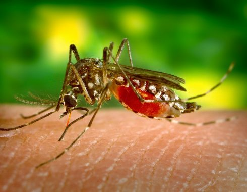 Hallan mecanismo de resistencia a insecticidas en mosquitos de la malaria