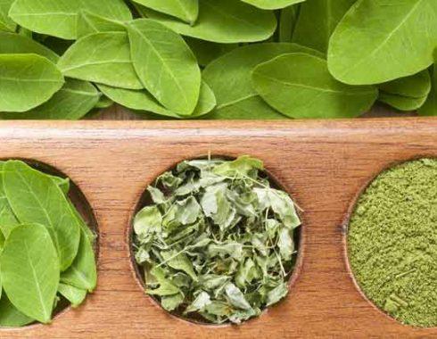 Moringa: salud, nutrición y otros usos