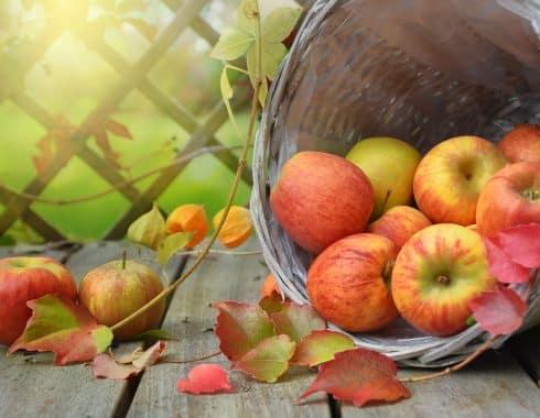 ¿Por qué una manzana al día es saludable?