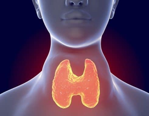 Es mejor la medida de la T4L que de la TSH por la T4L para evaluar función tiroídea