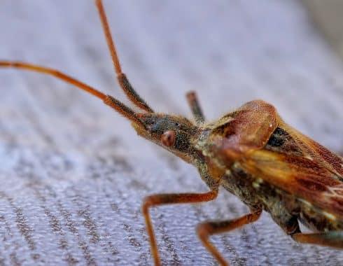 El mal de Chagas: una enfermedad parasitaria