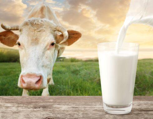 la leche cruda contiene bacterias resistentes a los antibióticos