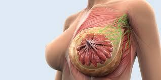 Posible método para tratar tumores de mama