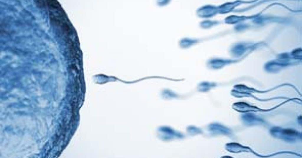 ¿El óvulo elige al espermatozoide?