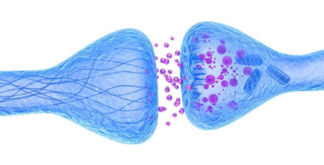 Neurocientíficos descubren sinapsis en el cerebro humano