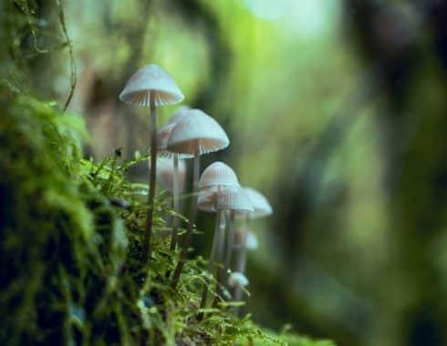 hongos mágicos en el tratamiento de la depresión