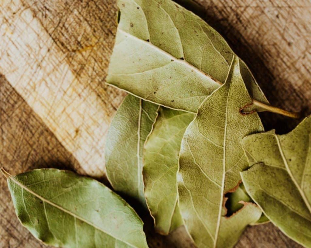 tomar té de hojas de laurel