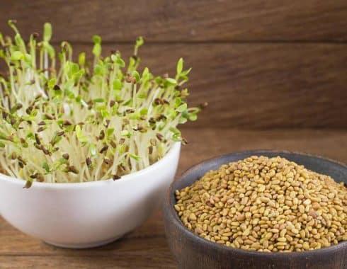 ventajas de comer alfalfa