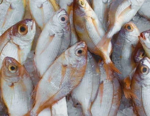 Cuáles son los beneficios de comer pescado